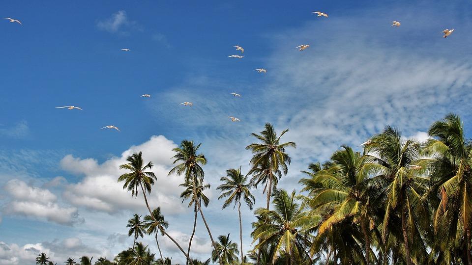 Sri Lanka Visa for Portuguese citizens